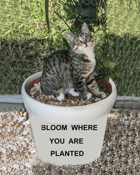 Insp Bloom Photography Art | It's Your World - Enjoy!