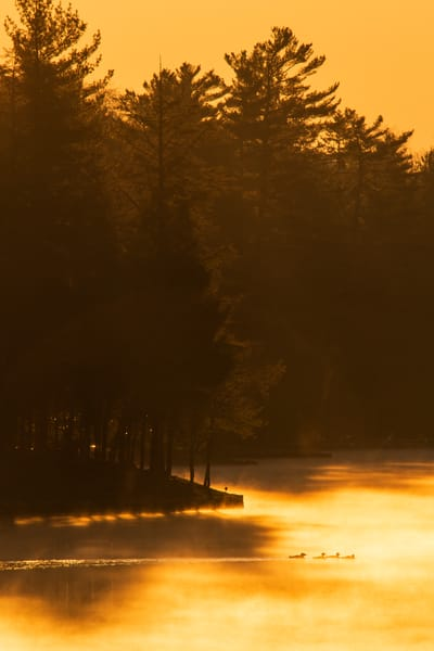 Loons On Golden Pond Photography Art | Kurt Gardner Photogarphy