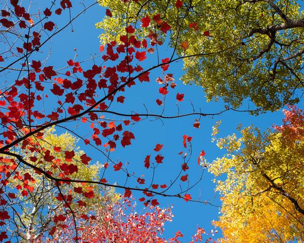 Fall Kaleidoscope Ii by Jeremy Simonson