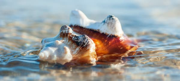 Watered shell