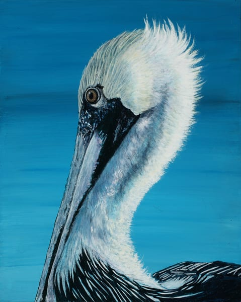 """""""Contemplation""""   Brown Pelican Art 