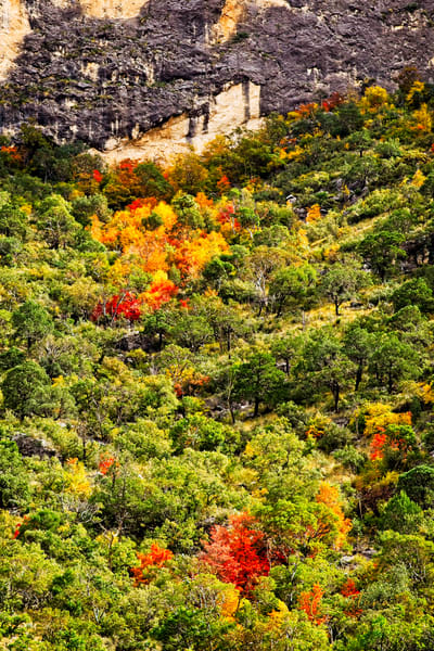Maples on Granite - A Fine Art Photograph by Marcos R. Quintana