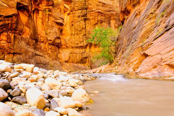 Tree in Virgin River - A Fine Art Photograph by Marcos R. Quintana