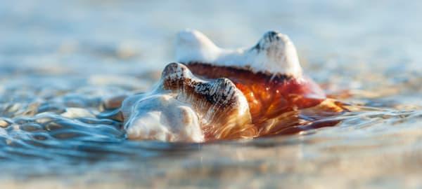 Sinking Shell
