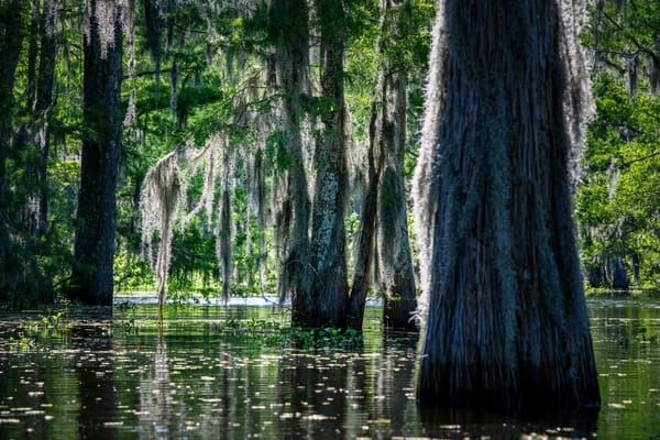Bayou Beauty Photography Art | Andy Crawford Photography - Fine-art photography