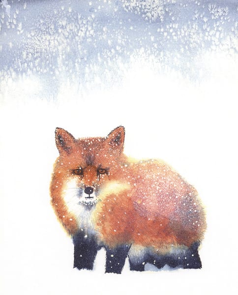 Snow Fox (Print On Metal) Art | East End Arts