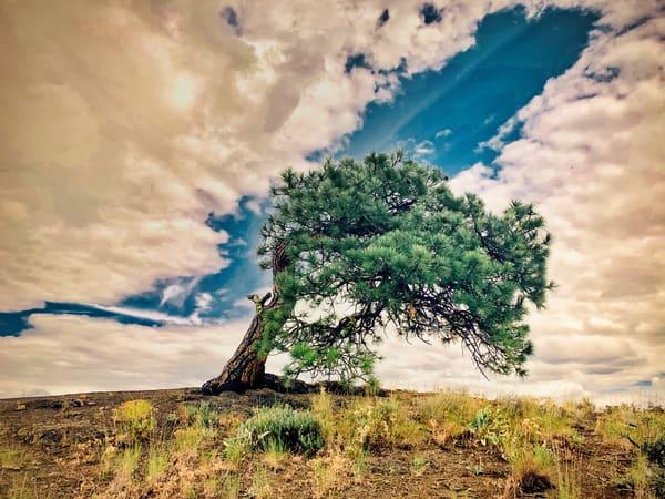 Old Lone Tree Photography Art | CJ Harding