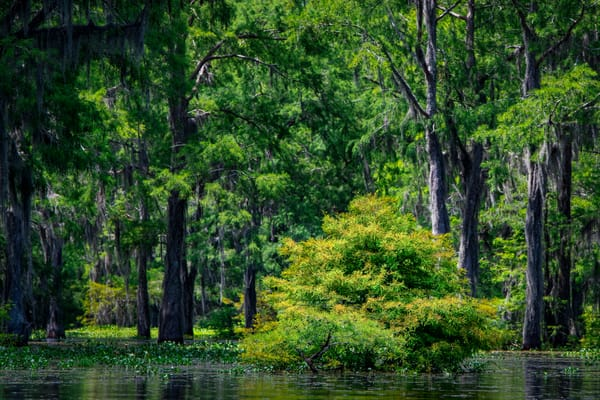 Neck Deep In The Swamp Photography Art | Andy Crawford Photography - Fine-art photography