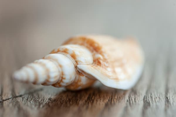 Connical shell