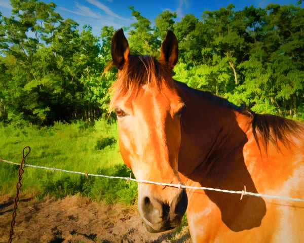 Horse In Pasture   Digital Painted Photograph Photography Art | Grace Fine Art Photography by Beth Sheridan