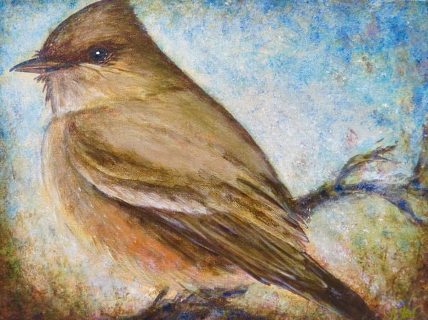 Say's Phoebe (Available) Art | Sacred Star Arts