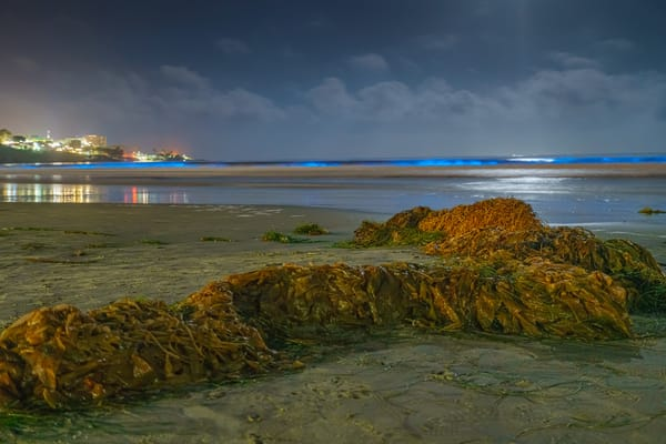 La Jolla Shores Bioluminescence Two 5 2 2020 Photography Art | McClean Photography