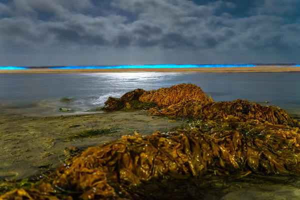 La Jolla Shores Bio Luminescence Three 5 2 2020 Photography Art | McClean Photography