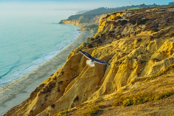 Eagle In Flight At Gliderport, La Jolla Fine Art Print Art | McClean Photography
