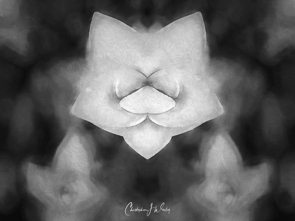 Primacy [Black and White Remix]