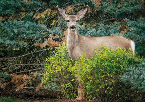 Just North American Wildlife