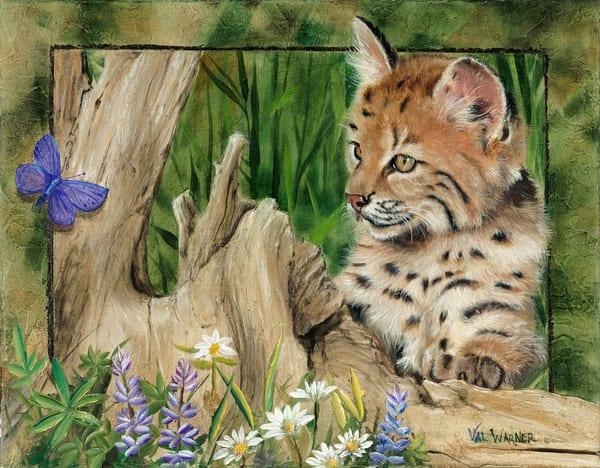 Bobcat_Kitten_and_Lupine