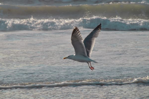 Taking Flight At Scarborough by Keith R Wahl, Made From RI Gallery