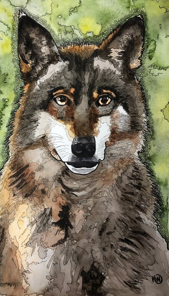 Wolf Art | Water+Ink Studios