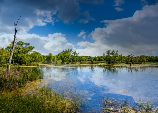 Brazos Bend Sunny Afternoon Photography Art | Grace Fine Art Photography by Beth Sheridan