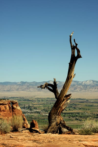 Lonely Tree | Limited Edition Collection Photography Art | Creighton Images