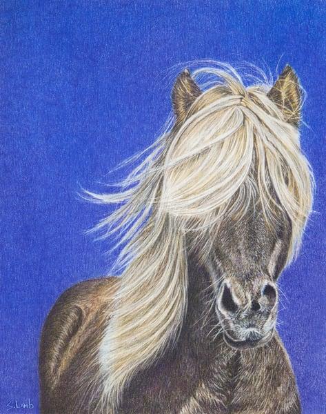 pony, fine art, coloured pencil, realism
