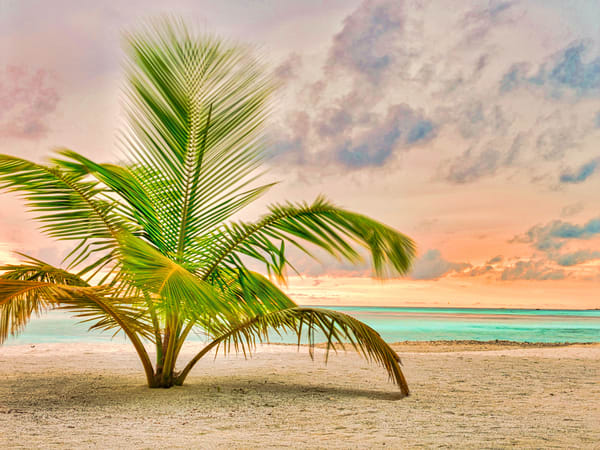Sunset Palm | Beach and Ocean Photography Print