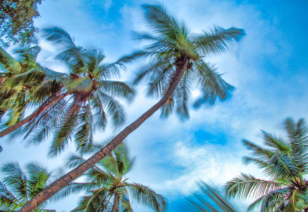 Maldives Leaning Palm Trees | Beach and Ocean Photography Print