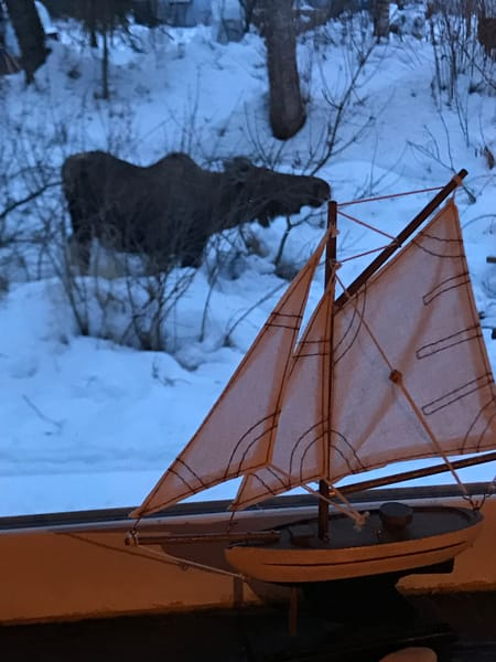 Moose And Small Boat Photography Art | Visionary Adventures, LLC