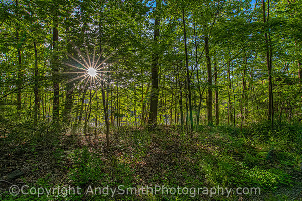 fine art photograph of woods with sun star