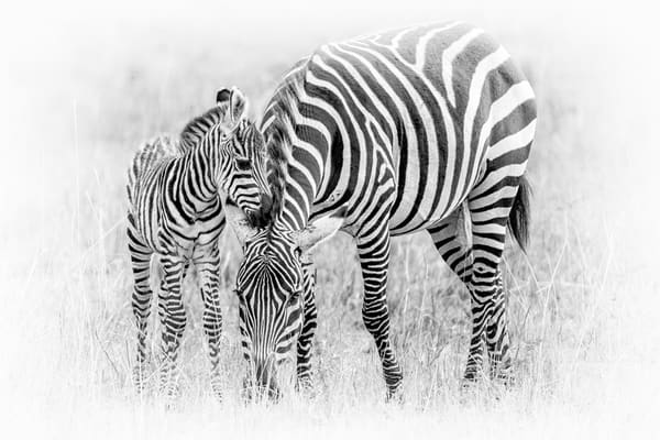 Stripes, B&W Photography Art | Carol Brooks Parker Fine Art Photography