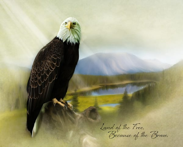 Alaska Eagle Of Freedom Photography Art | An Artist's View Photography