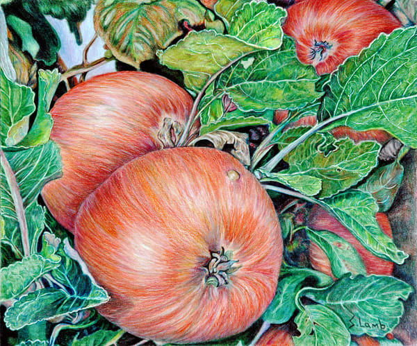 Harvest Time Art   Sherry Lamb Fine Art