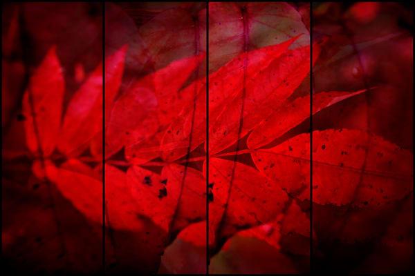 Miskobag II (a red leaf) by Jeremy Simonson