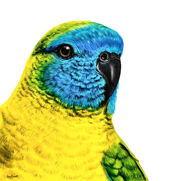 Tina - Turquoise Parrot