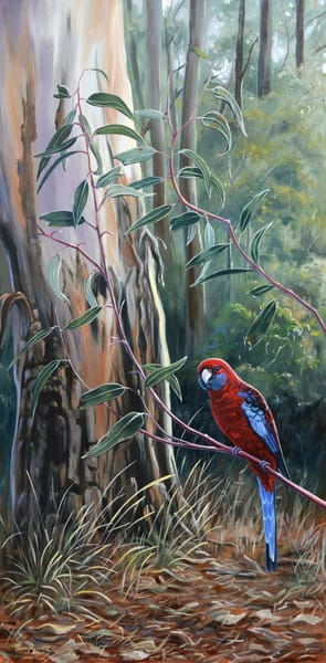 Crimson Rosella - Bushland Beauty