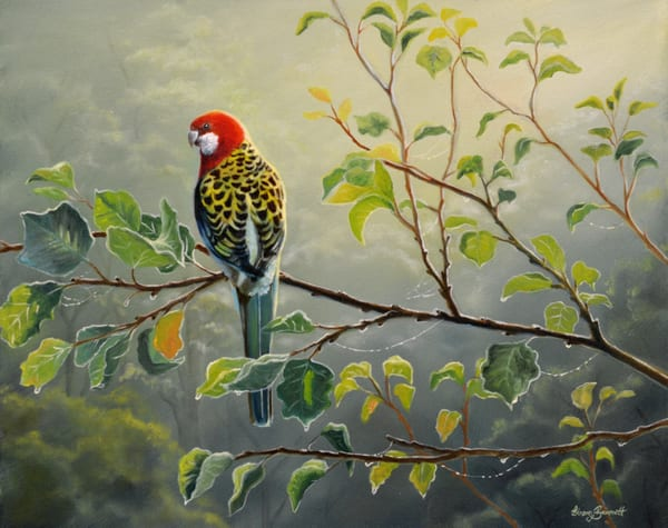 Eastern Rosella - Morning Light
