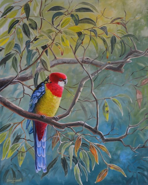 Eastern Rosella - Morning Colours