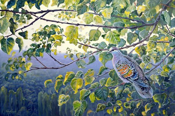 Bronzewing Pigeon - Apricot Sanctuary