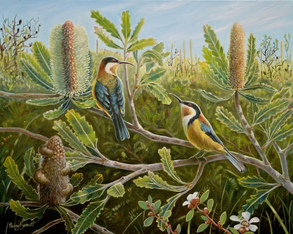 Eastern Spinebills - Awabakal Heathland