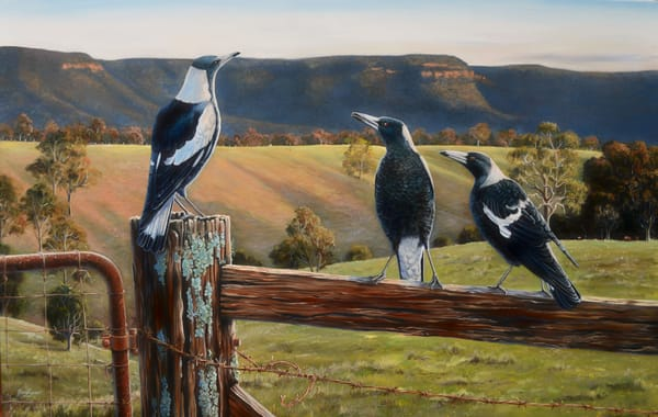 Australian Magpies - Fence Sitters