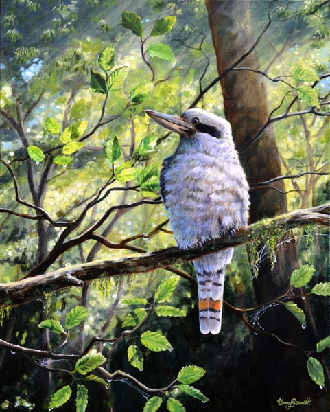 Kookaburra - Forest Friend