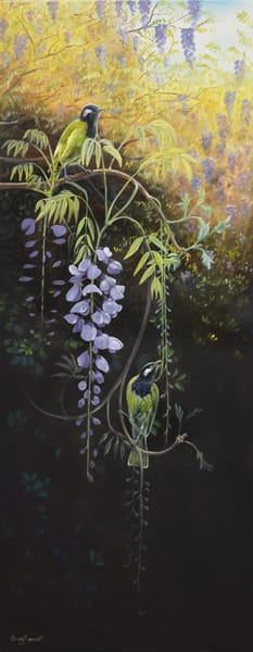 White-eared Honeyeaters - Wysteria Blossoms