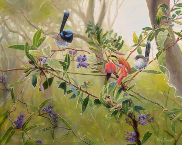 Superb Fairy Wrens - Pea Flowers