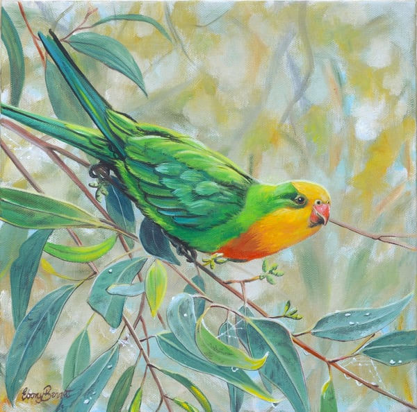 Superb Parrot - Golden Light