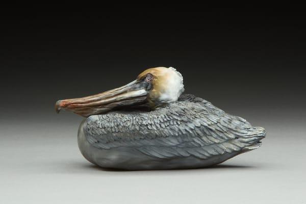 """""""Fun In The Sun""""   Brown Pelican Art   Drawn To Nature"""