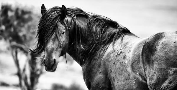 Will Of The Wind Photography Art | Koru Photo Designs