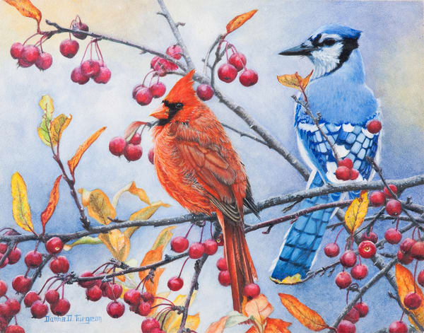 Cardinal And Bluejay Timeout  Art | artalacarte