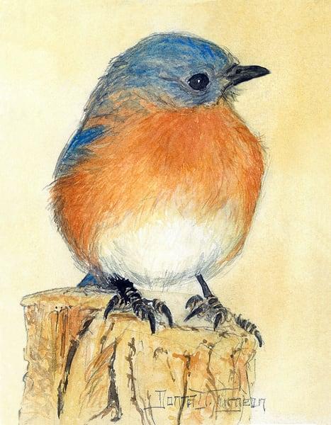 Eastern Bluebird Male  Art | artalacarte