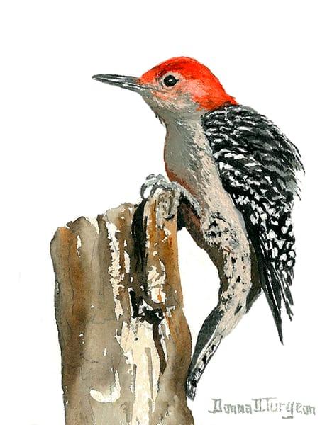 Red Bellied Woodpecker  Art | artalacarte